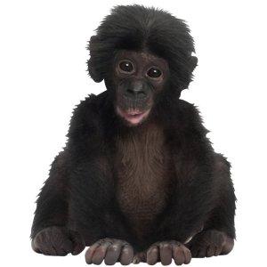 Muursticker zoo family baby aapje
