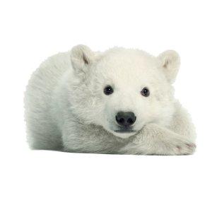 muursticker zoo family ijsbeer