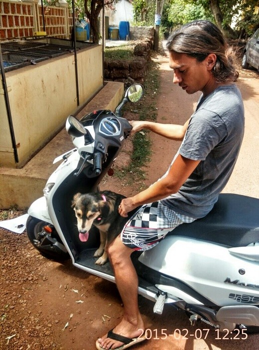 dog on scooter india
