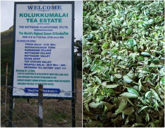 Less Touristy Than Munnar | Explore Chinnakanal Tea Fields kerala tea plantation