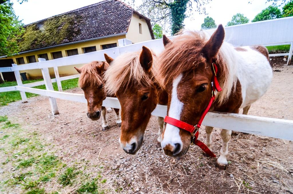 Lipica Horse Farm