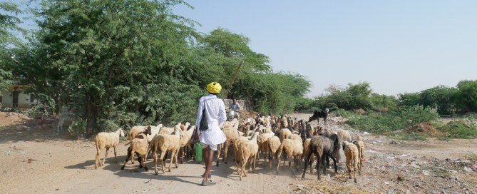 Rajasthan tour packages bishnoi village tribal tour