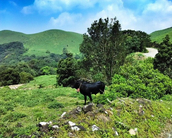 backpacking coorg mandalpatti 4wd