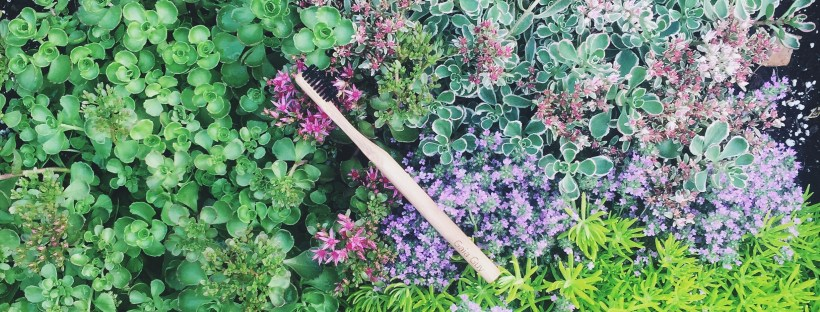Bamboo toothbrush charcoal bristle Gaia guy Plastic Free July living roof succulent garden