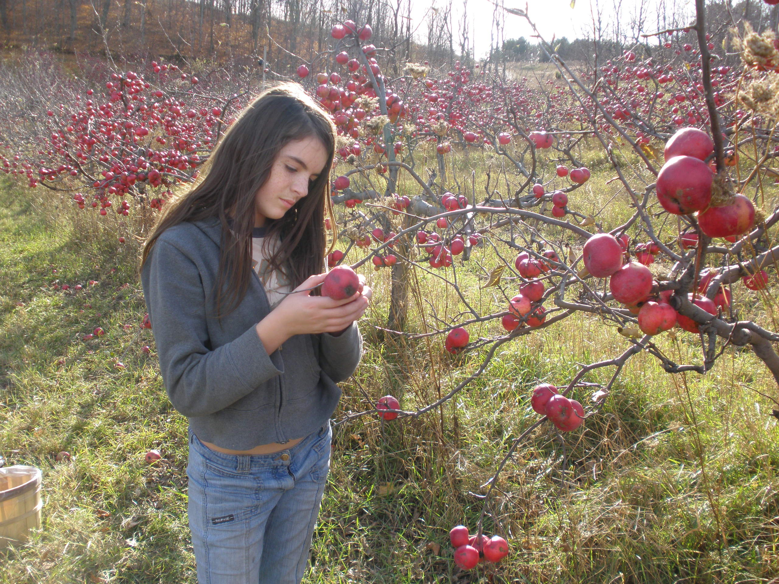 Pickin' Apples