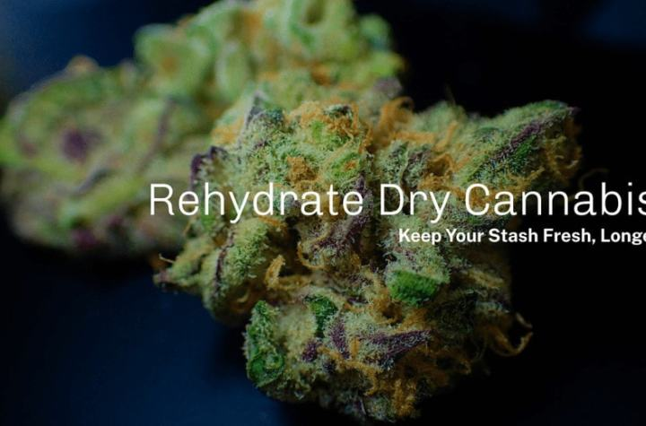 Learn How to Rehydrate Weed
