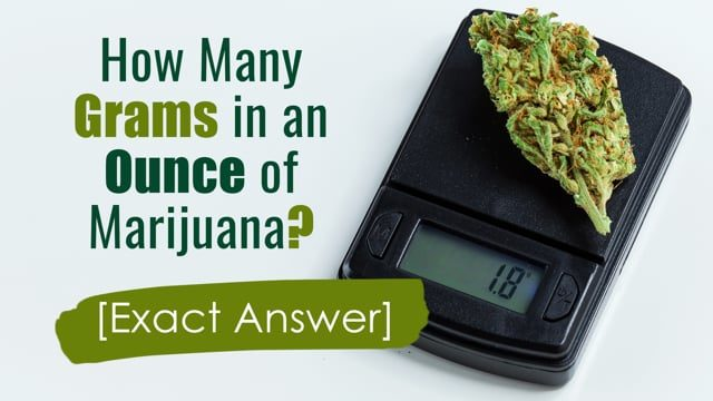 How Many Grams in an Ounce