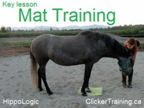 mat_training_hippologic1