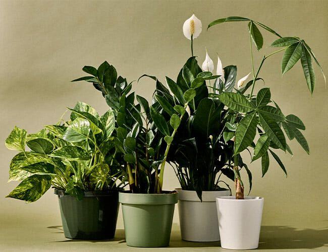 10 Best Indoor Plants Gear Patrol