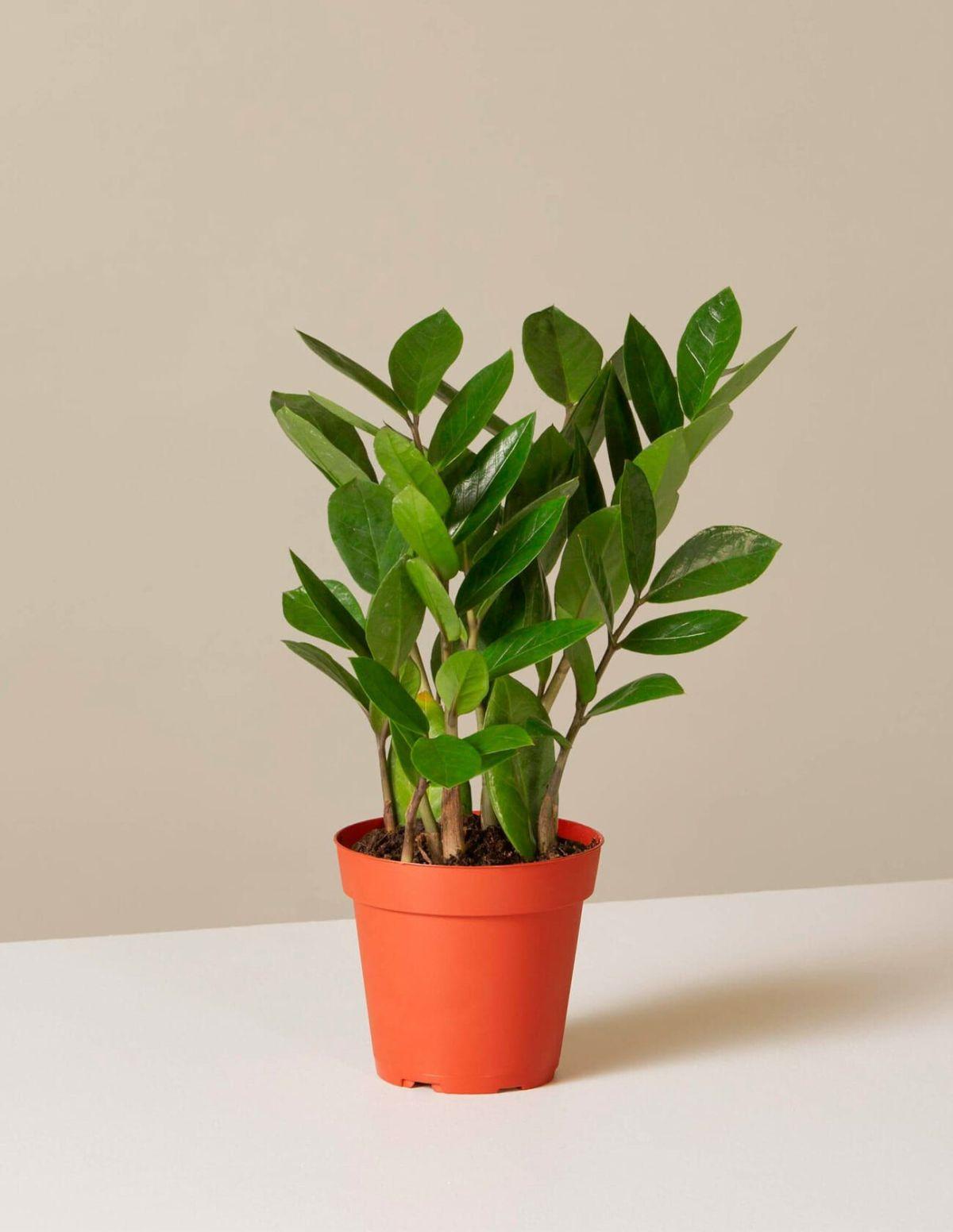 10-Best-Indoor-Plants-Gear-Patrol-zizi