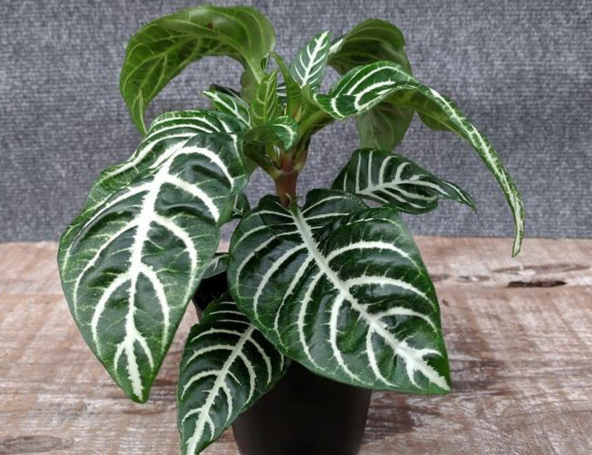 Zebra-Plant-Gear-Patrorl