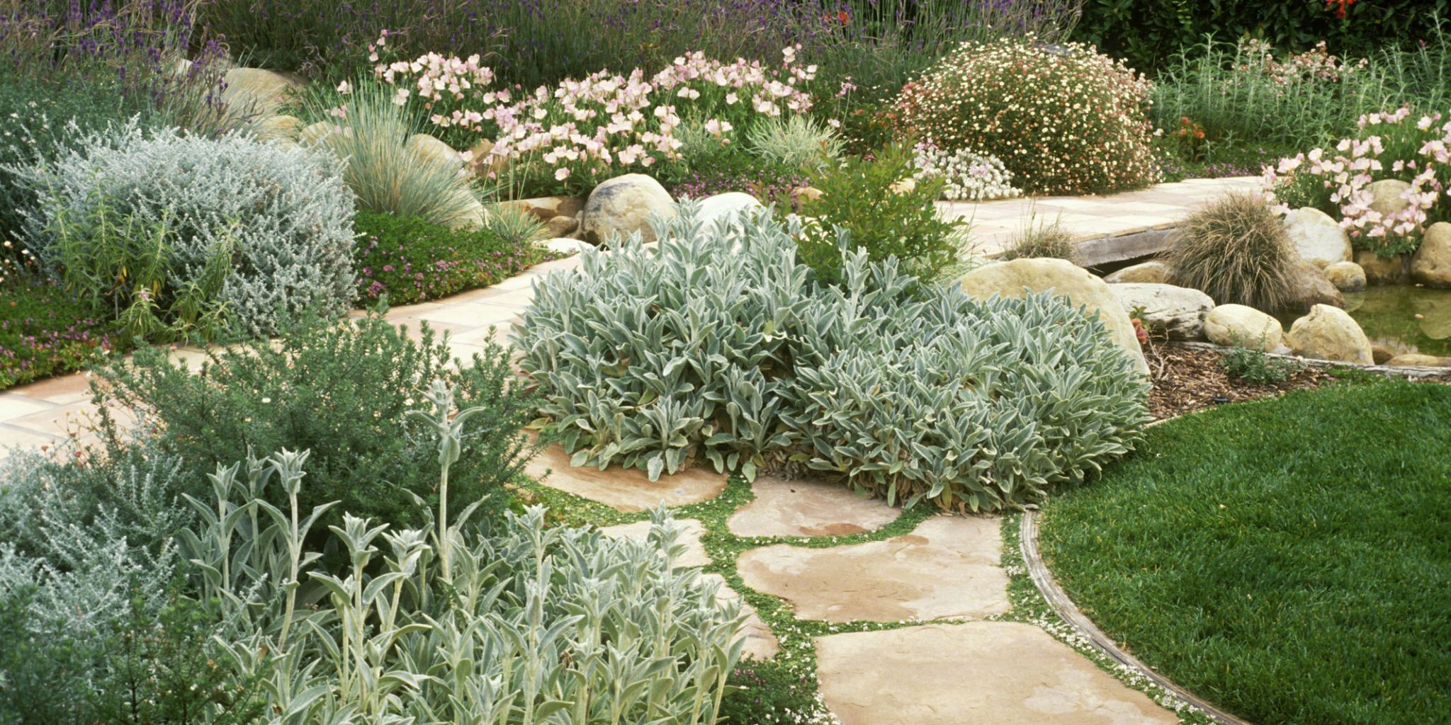 water saving landscaping