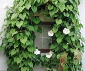 best climbing plants