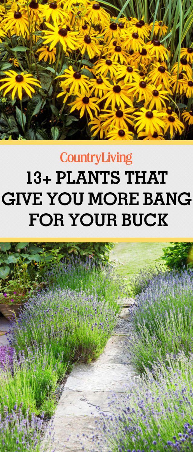 easy garden plants grow