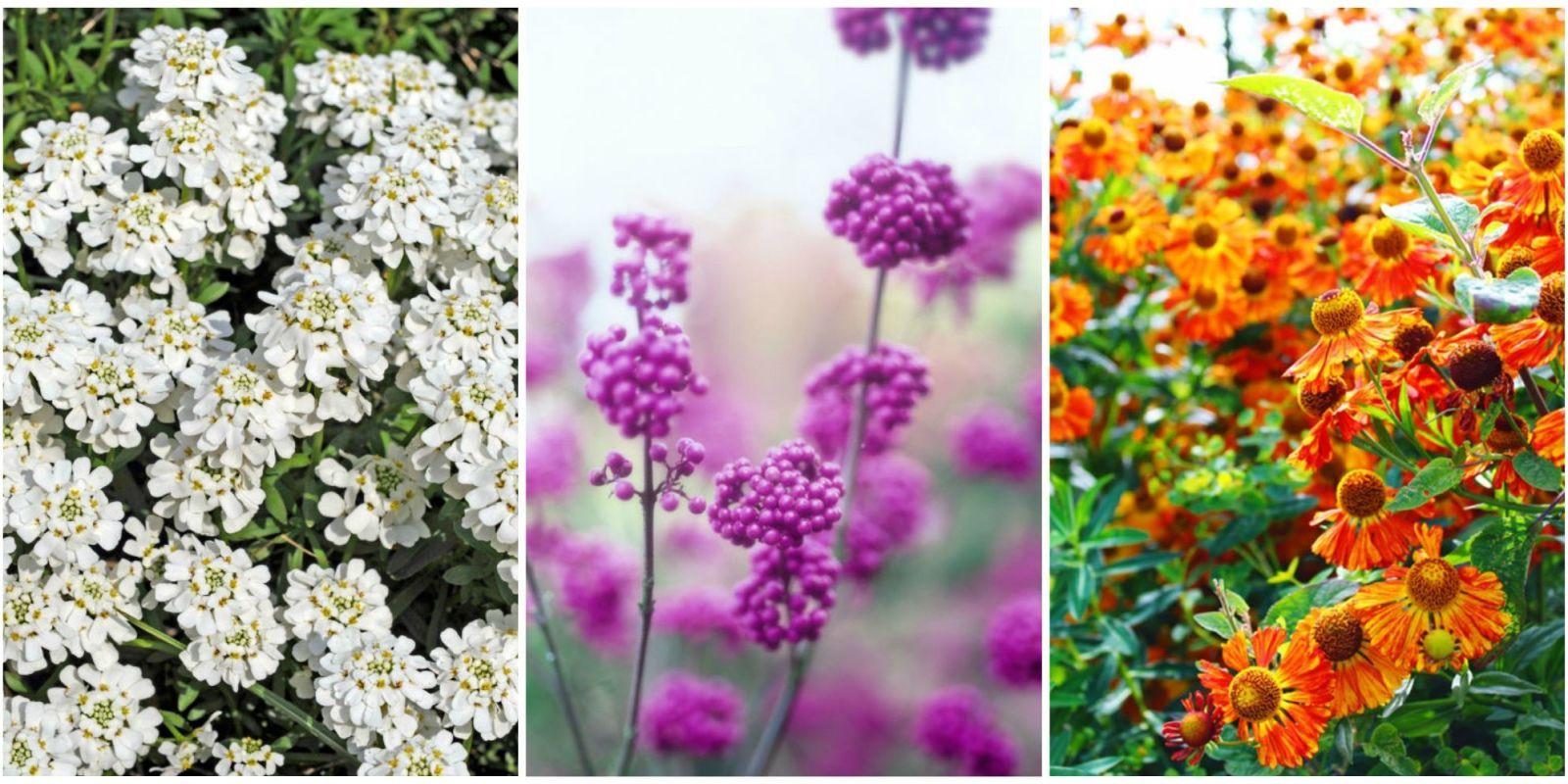 fall flowers plant - pretty