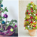 Succulent Christmas Trees Mini Christmas Trees Made With Succulents