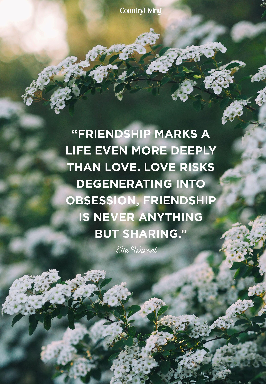 Emotional Deep Friendship Quotes : emotional, friendship, quotes, Friendship, Quotes, Short, Sayings, About