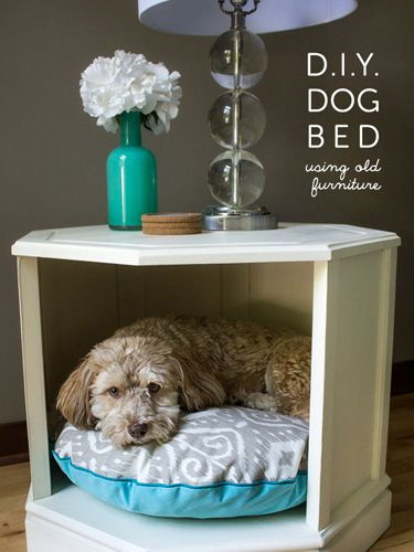 Dog Bed Attached To Human Bed : attached, human, Adorable, Cheap