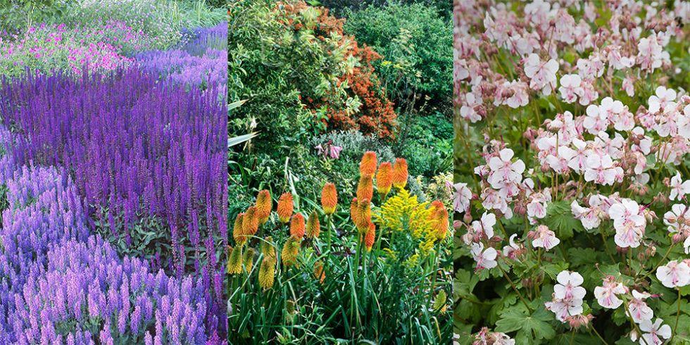 6 plants perfect dry gardens