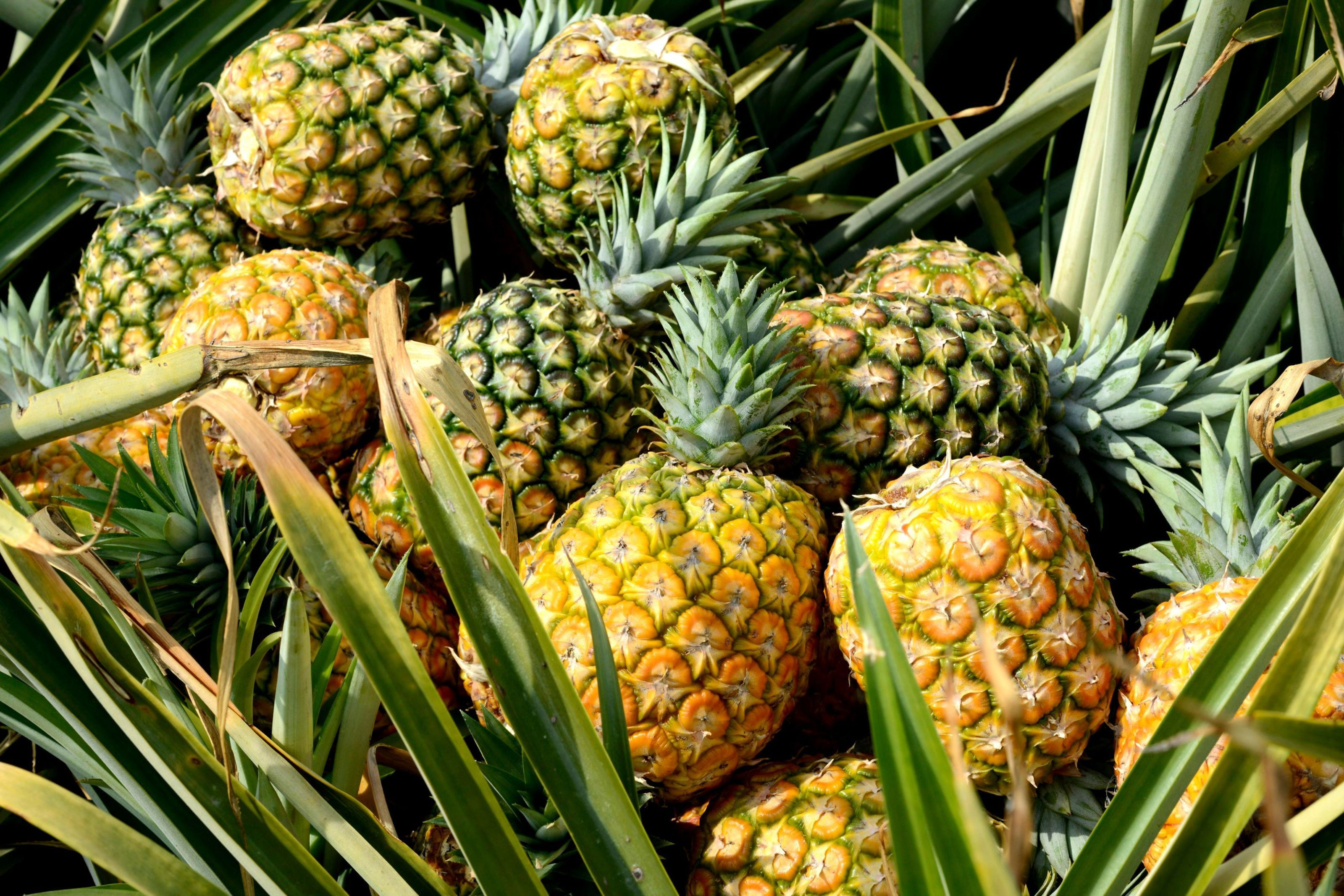 here s why pineapples