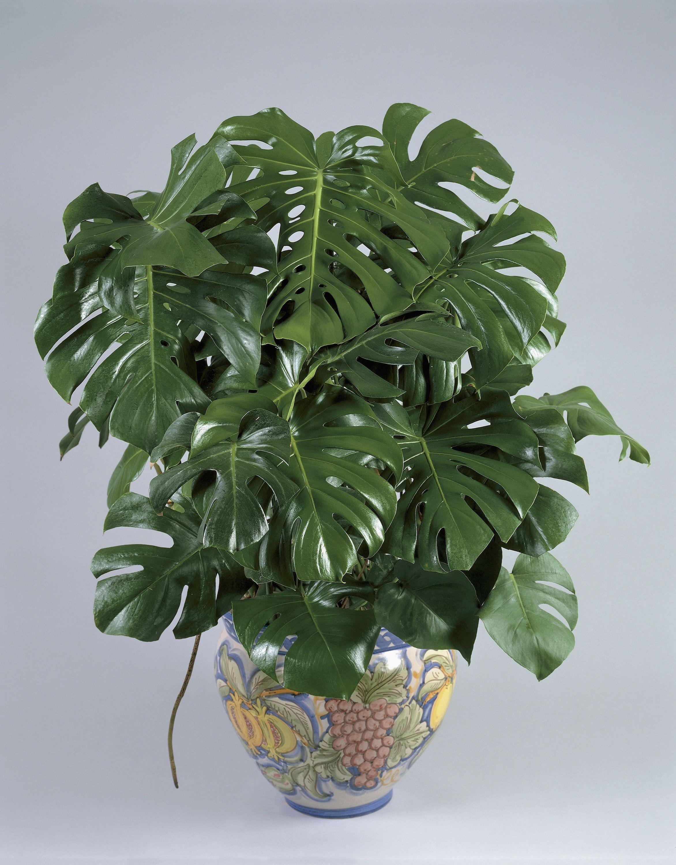 Large Plastic Plant Pots Sale