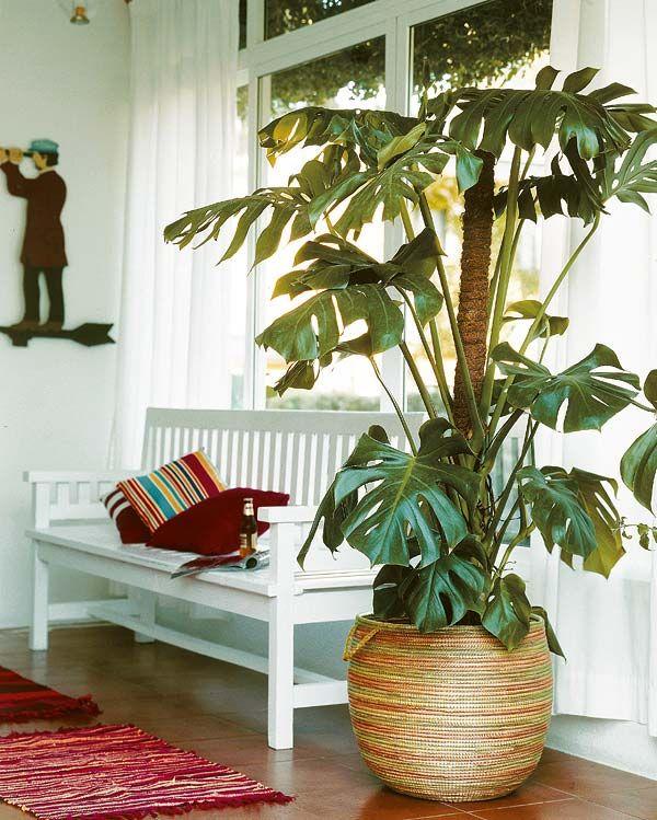 Las plantas de interior ms resistentes  Cmo decorar con