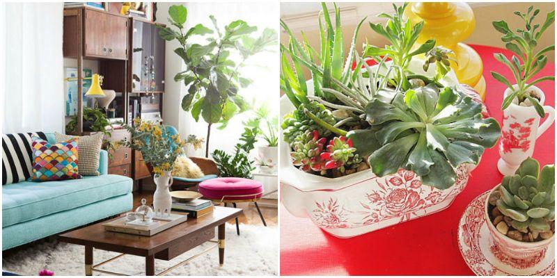 living room plant table. Black Bedroom Furniture Sets. Home Design Ideas