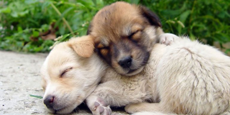 Free Fall Puppy Wallpaper Sharing Cute Puppy Photos With Your Hubby Will Save Your