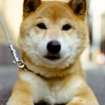 The 25 Cutest Dog Breeds Most Adorable Dogs And Puppies