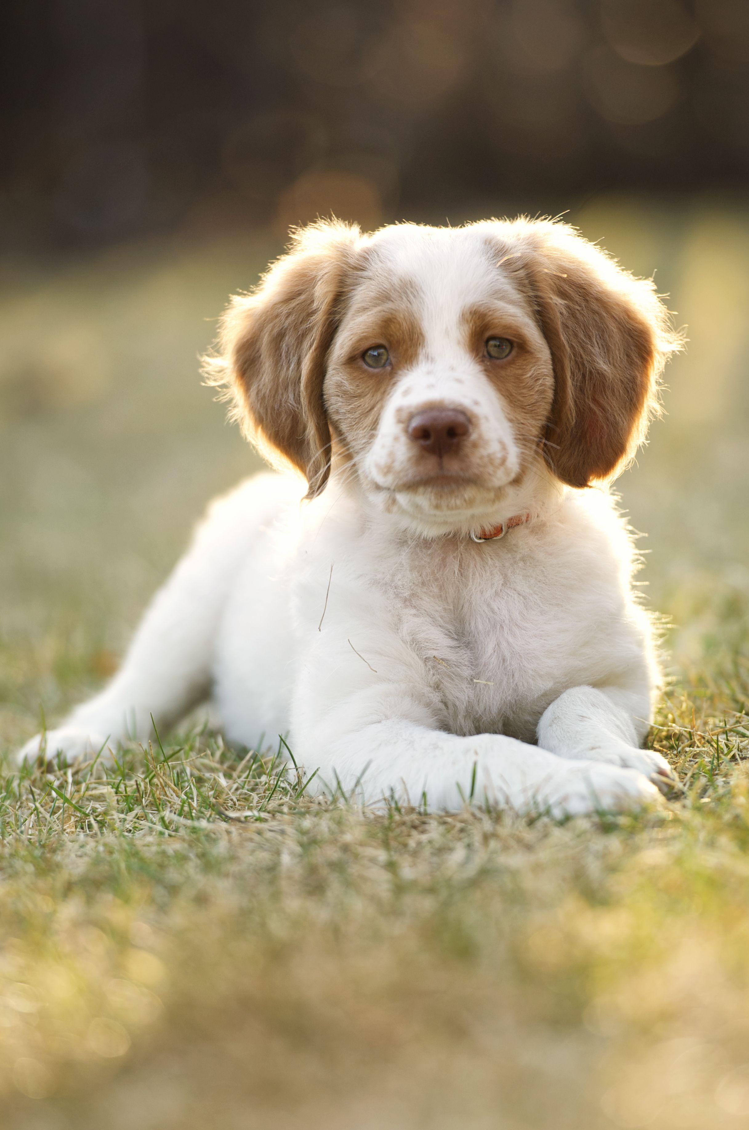 25 cutest dog breeds