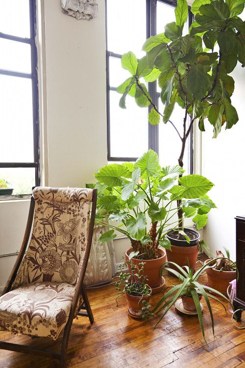 18 Best Indoor Plants Good Inside Plants For Small Space Gardening