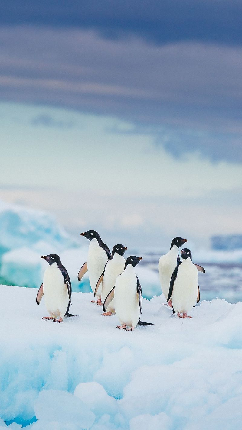 30 Absolutely Delightful Facts You Never Knew About Penguins
