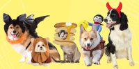 30 Best Dog and Cat Halloween Costumes 2018 - Cute Pet ...