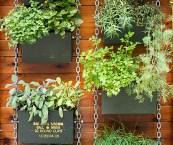 herbs for vertical garden