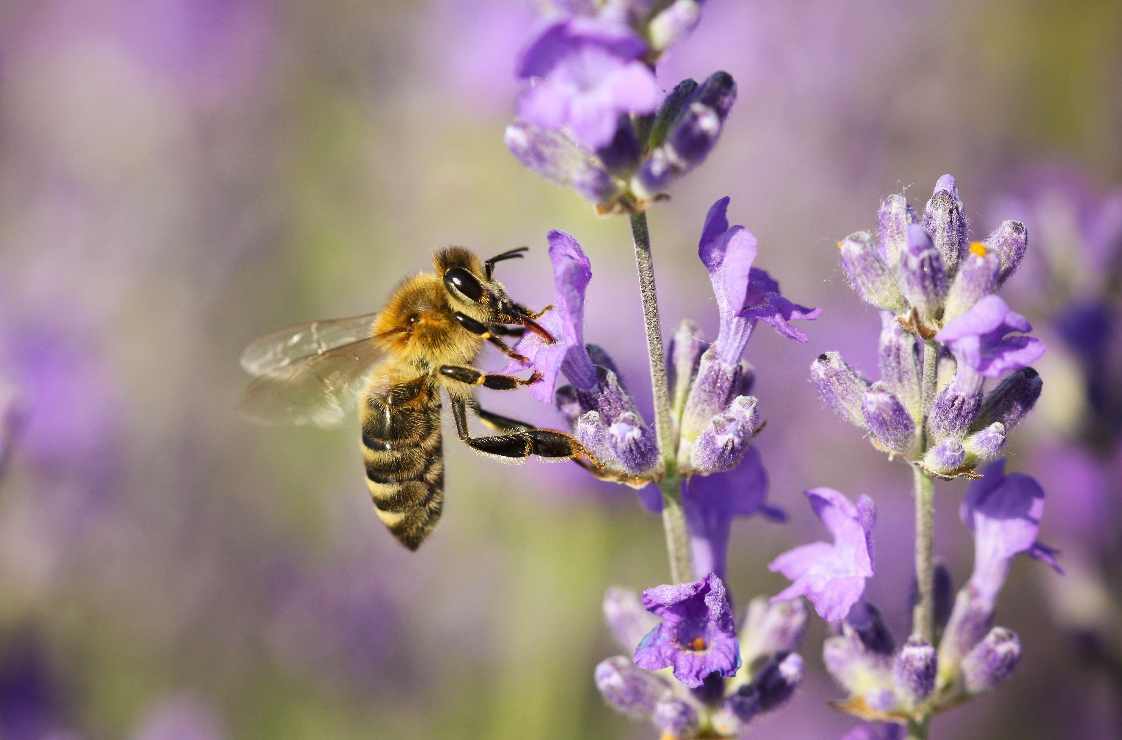 5 Bee Friendly Plants And Flowers For Your Garden How To Save The Bees