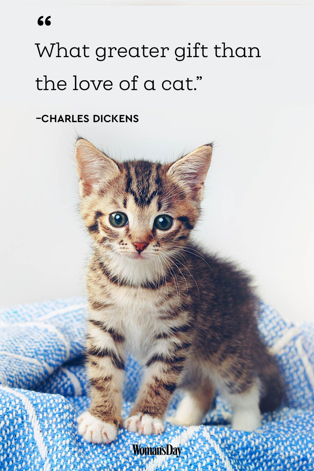 Cute Kitten Pictures With Sayings : kitten, pictures, sayings, Quotes, Sayings, Describe
