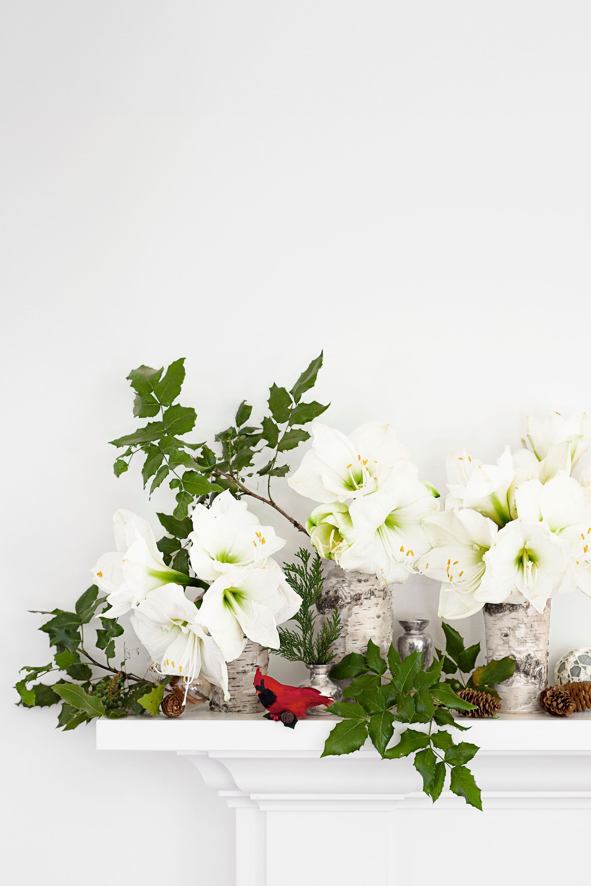 10 Best Christmas Plants How To Care For Christmas Flowers