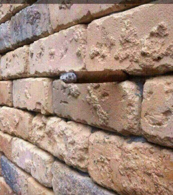 optical illusions find cat # 42