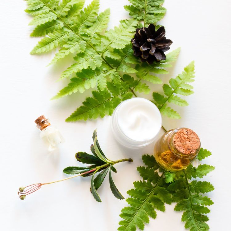 natural cosmetics, a leaf of a fern and a cone