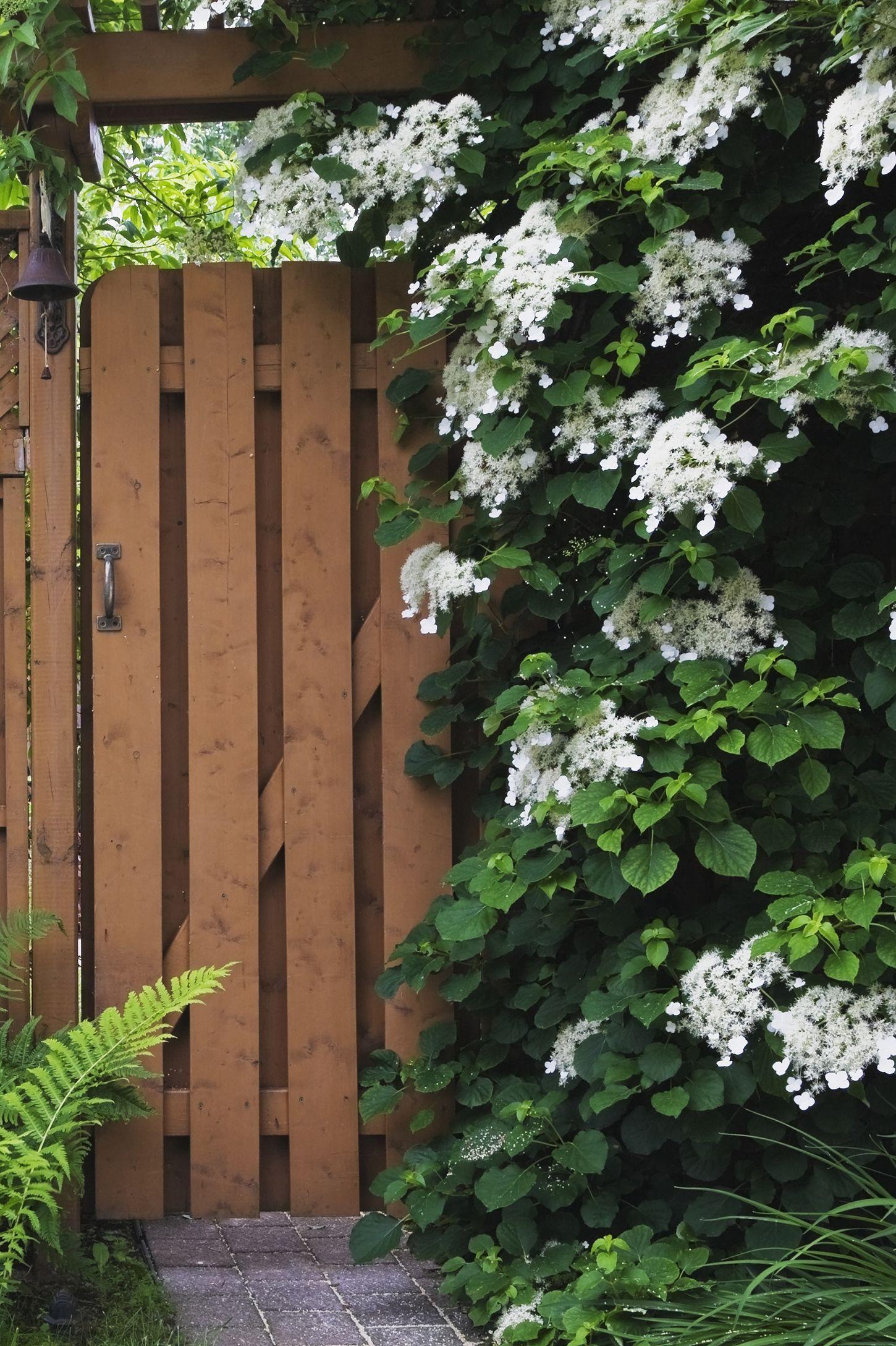 12 Fastgrowing Flowering Vines  Best Wall Climbing Vines