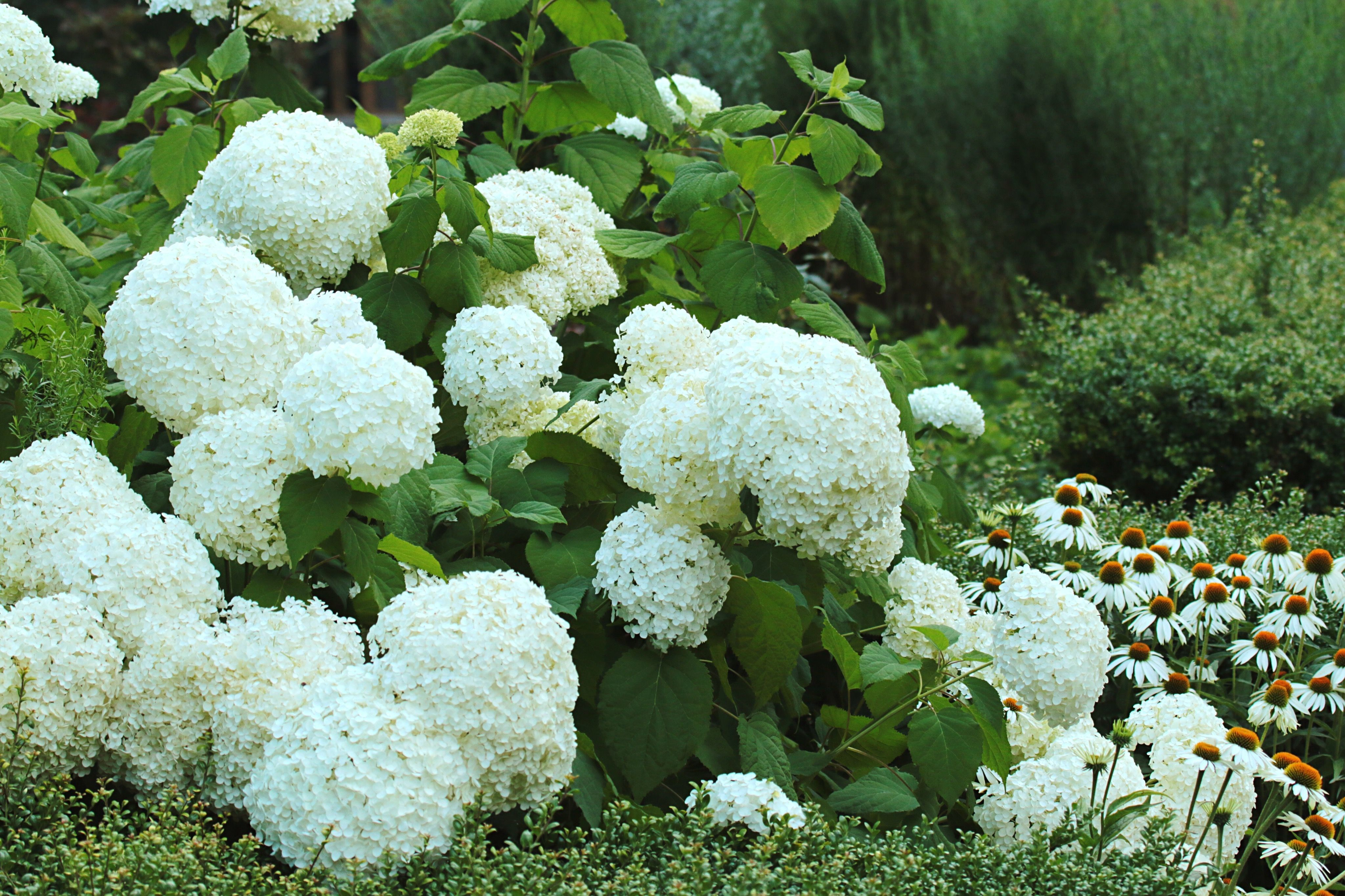 20 white flowers for