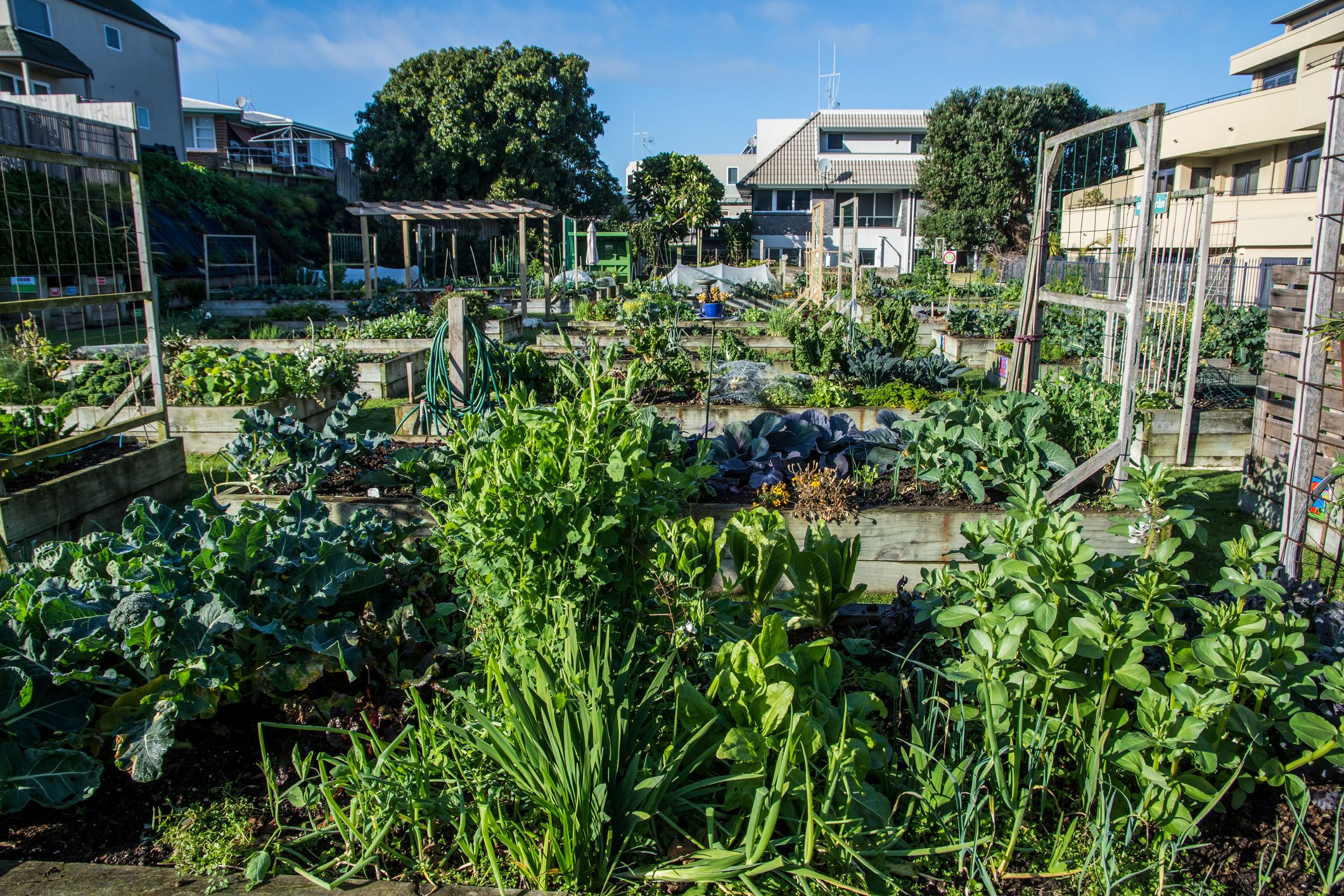 5 allotment ideas for