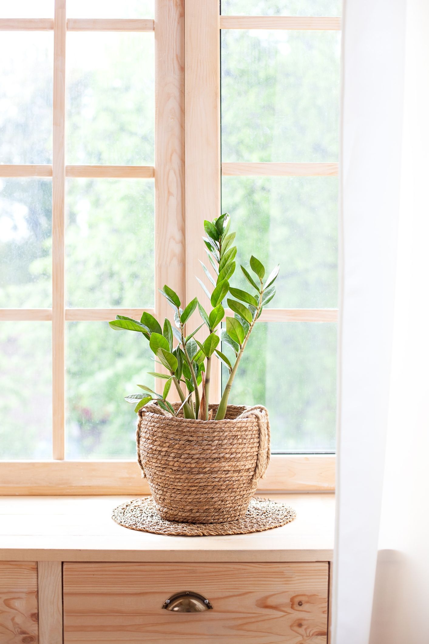 15 Best Bedroom Plants Plants For Bedroom That Clean Air