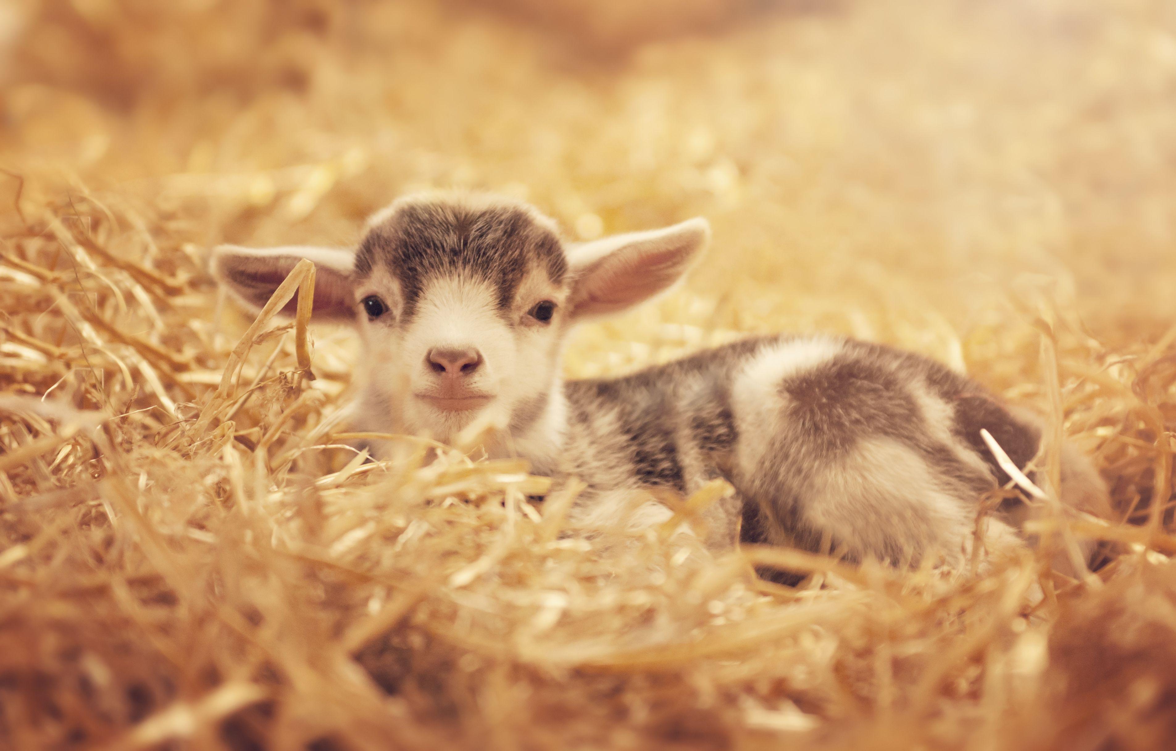 baby animals cute photos