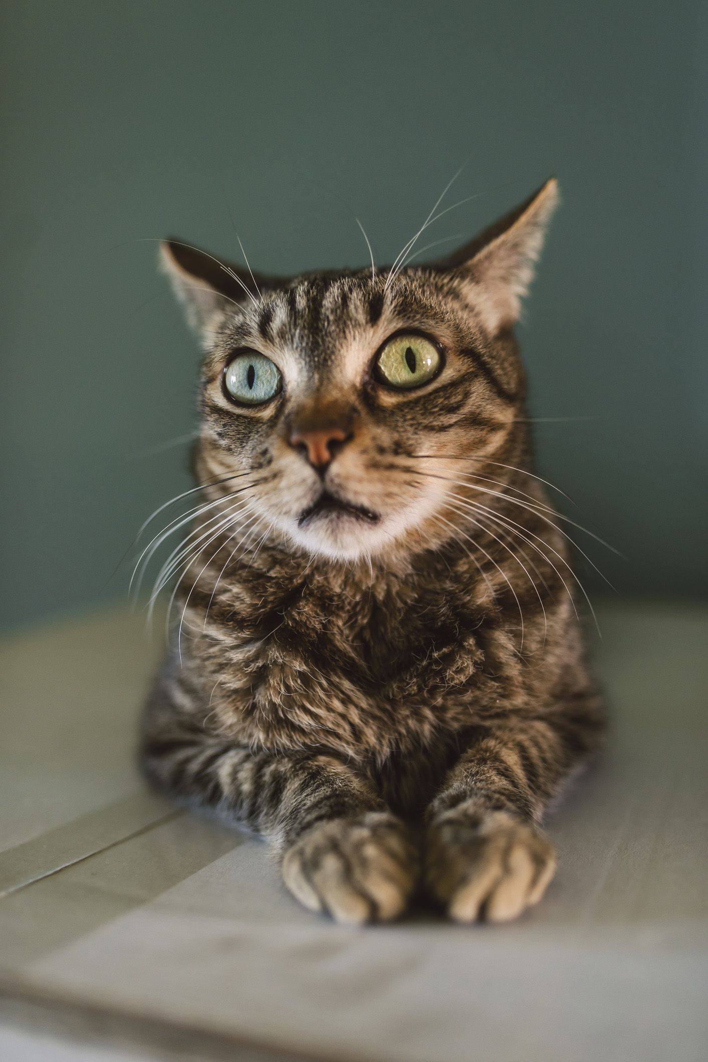 20 cute cat names