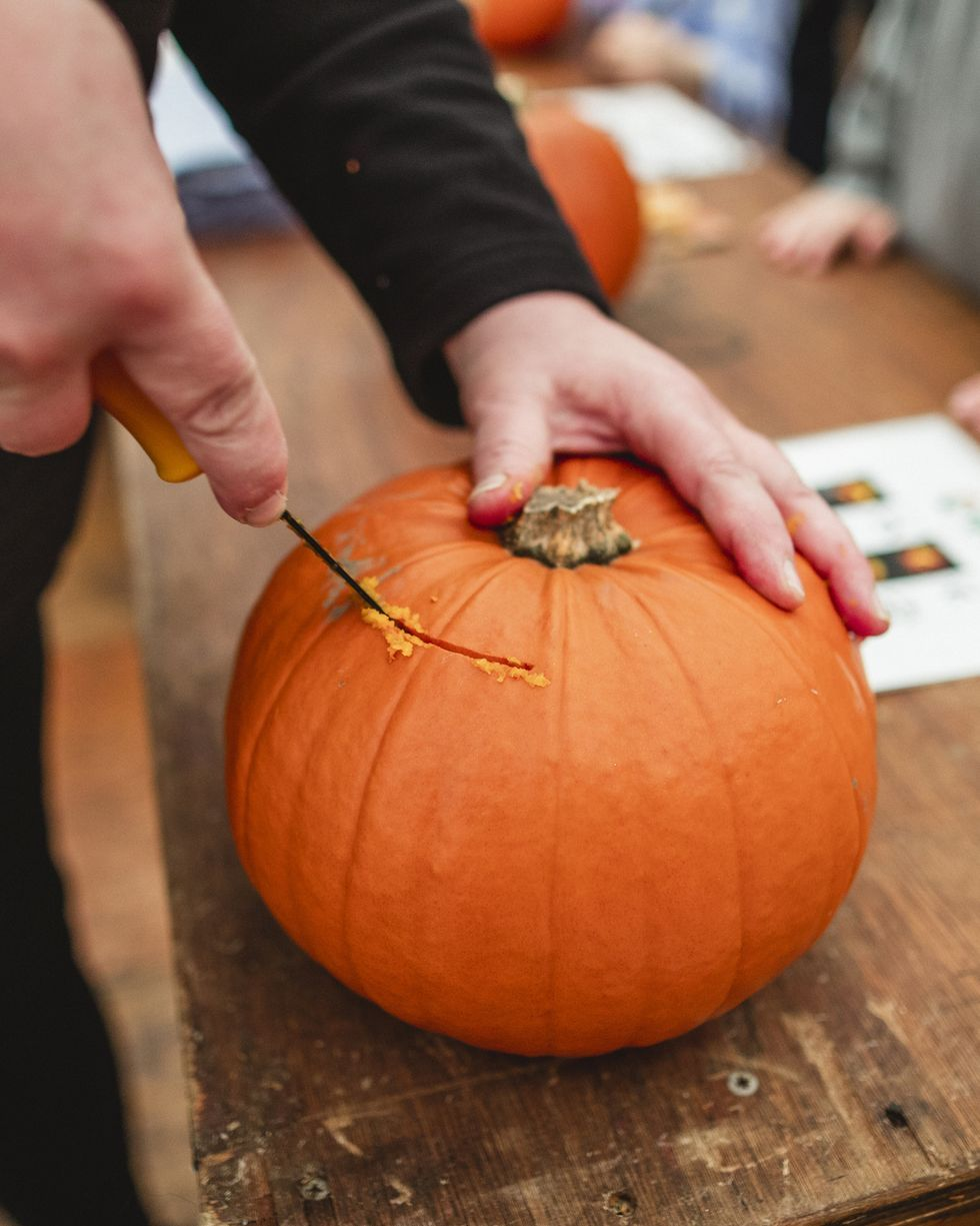 cutting into the pumpkin