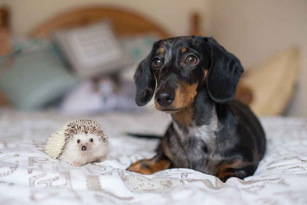 20 cute dog pictures