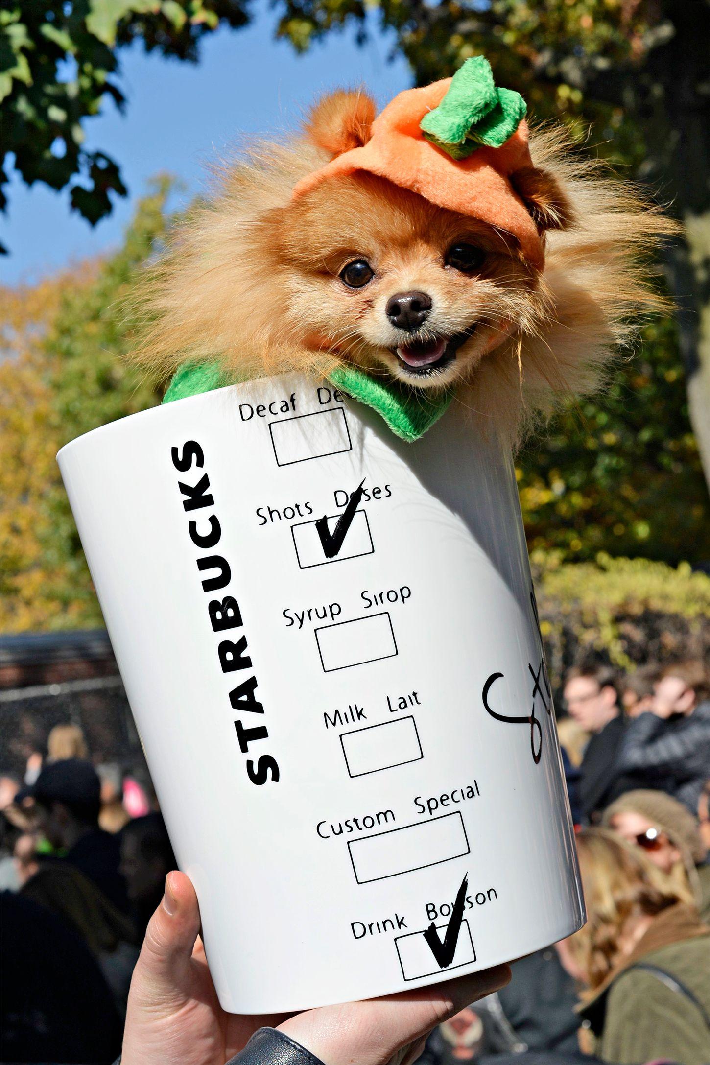 62 Best Dog Costume Ideas Diy Pet Halloween Costumes