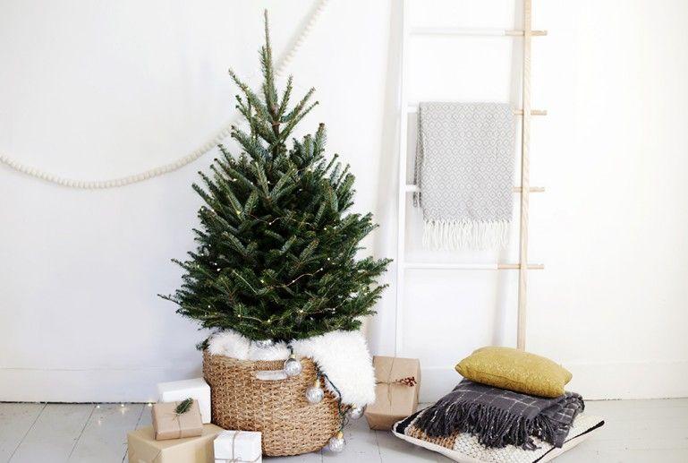 15 small christmas trees