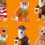 36 Funniest Dog Halloween Costumes 2020